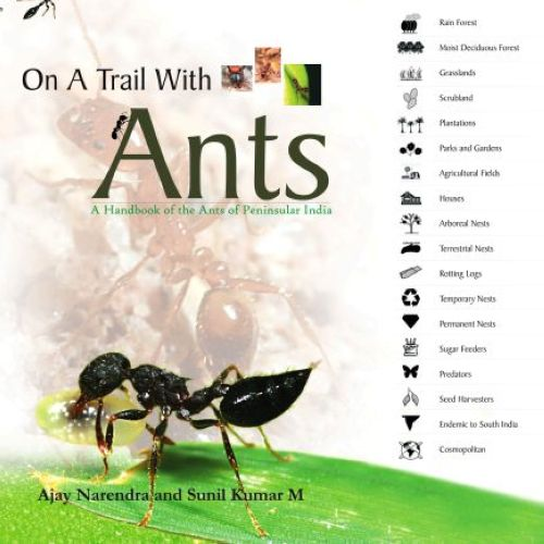 On a Trail with Ants